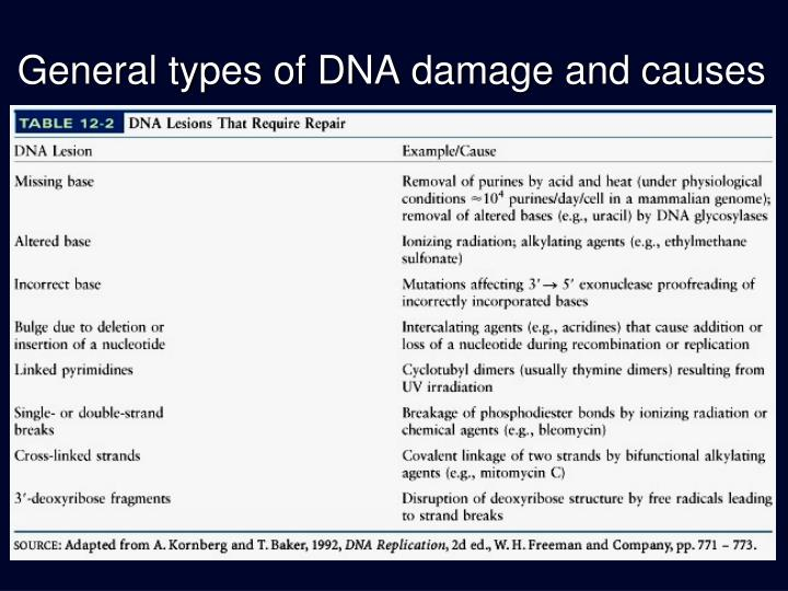 General types of dna damage and causes