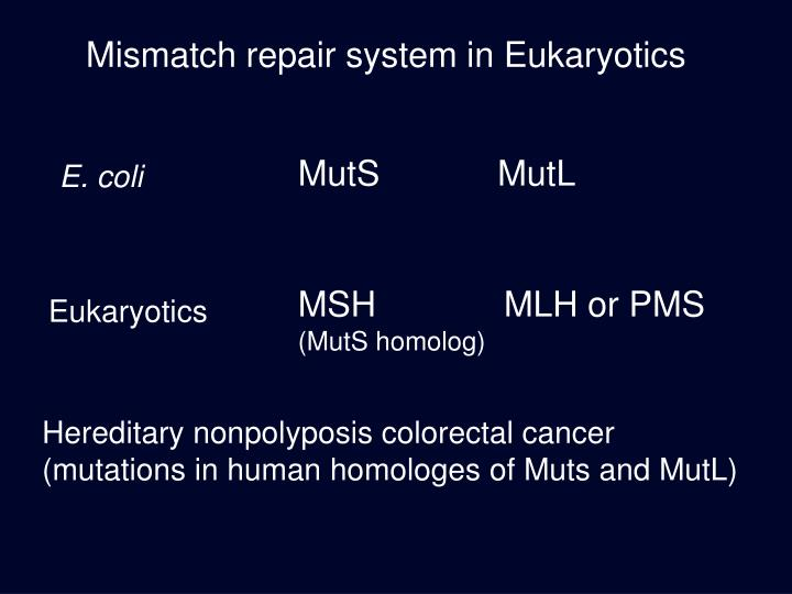 Mismatch repair system in Eukaryotics