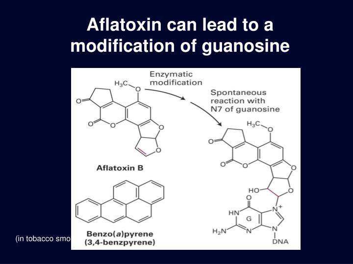 Aflatoxin can lead to a