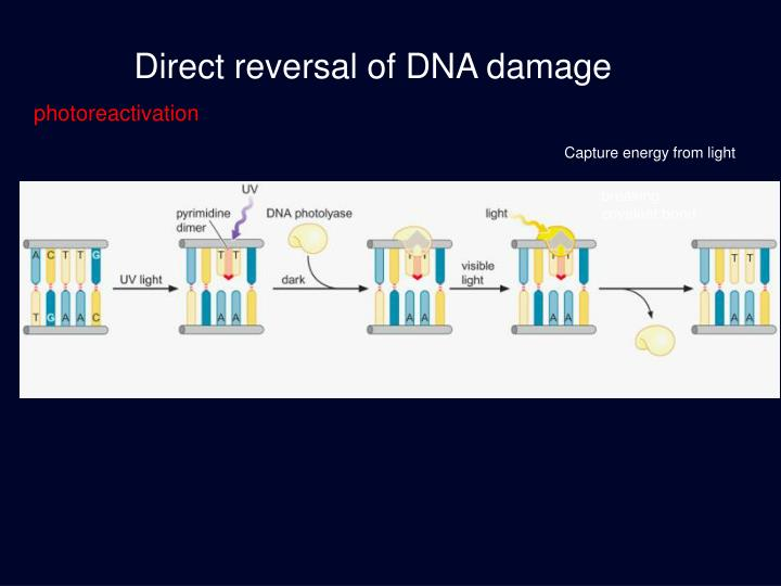 Direct reversal of DNA damage