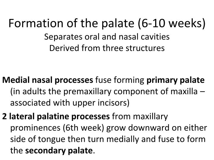 Formation of the palate (6-10 weeks)