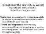 formation of the palate 6 10 weeks separates oral and nasal cavities derived from three structures