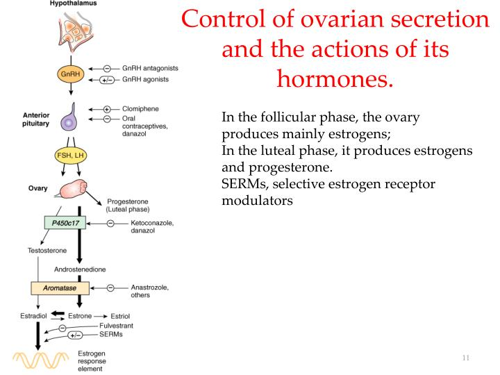 Control of ovarian secretion and the actions of its hormones.