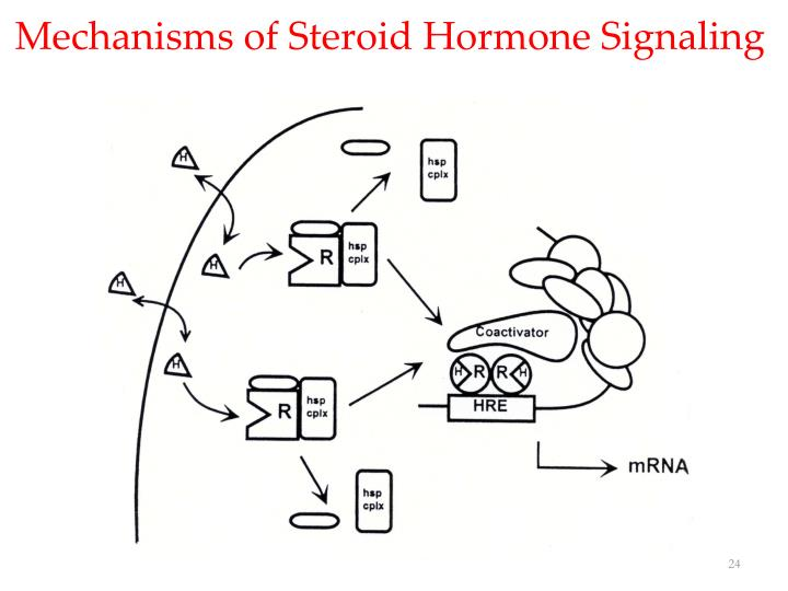 Mechanisms of Steroid Hormone Signaling
