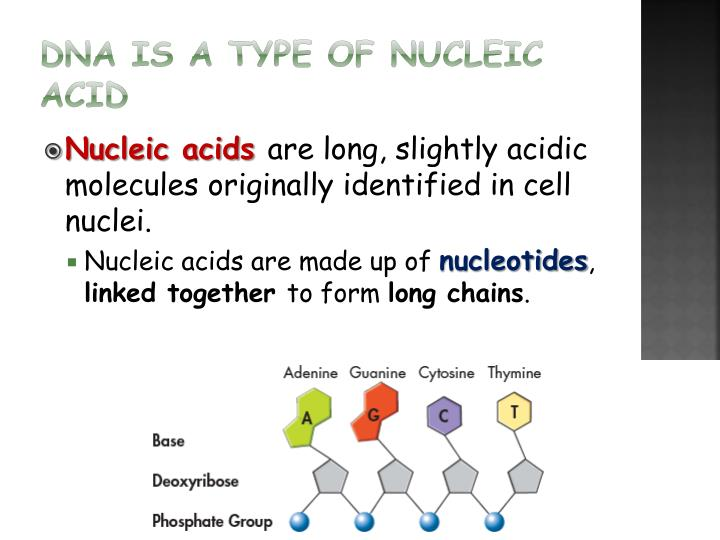 DNA is a type of Nucleic Acid