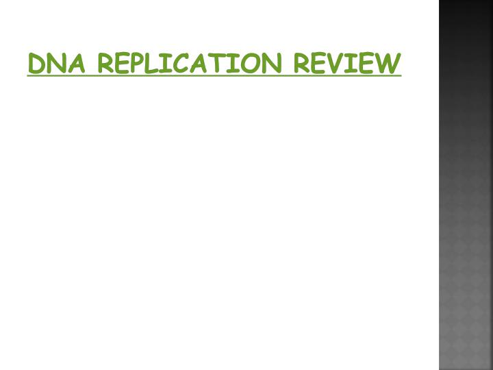 DNA REPLICATION review