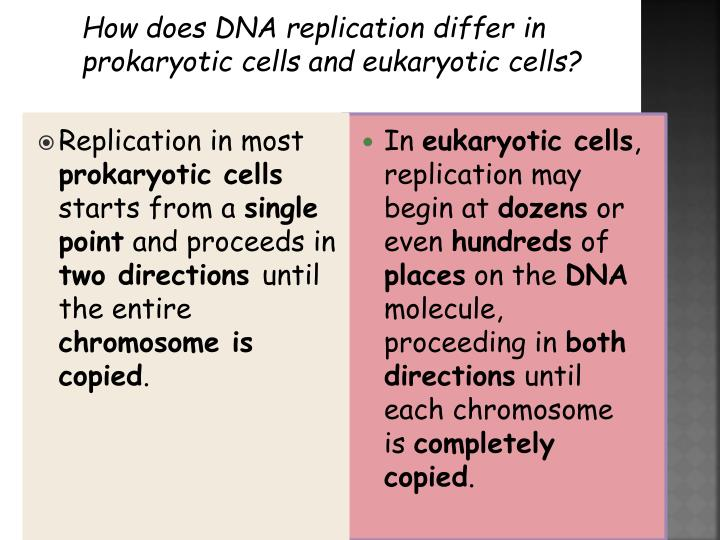 How does DNA replication differ in prokaryotic cells and eukaryotic cells?