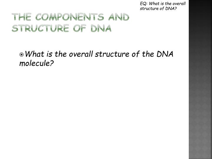 EQ: What is the overall structure of DNA?