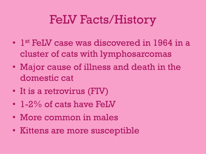 Felv facts history