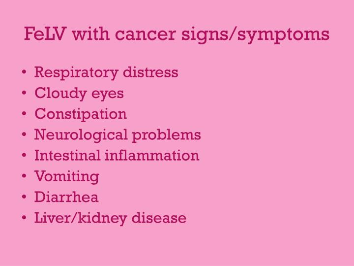 FeLV with cancer signs/symptoms