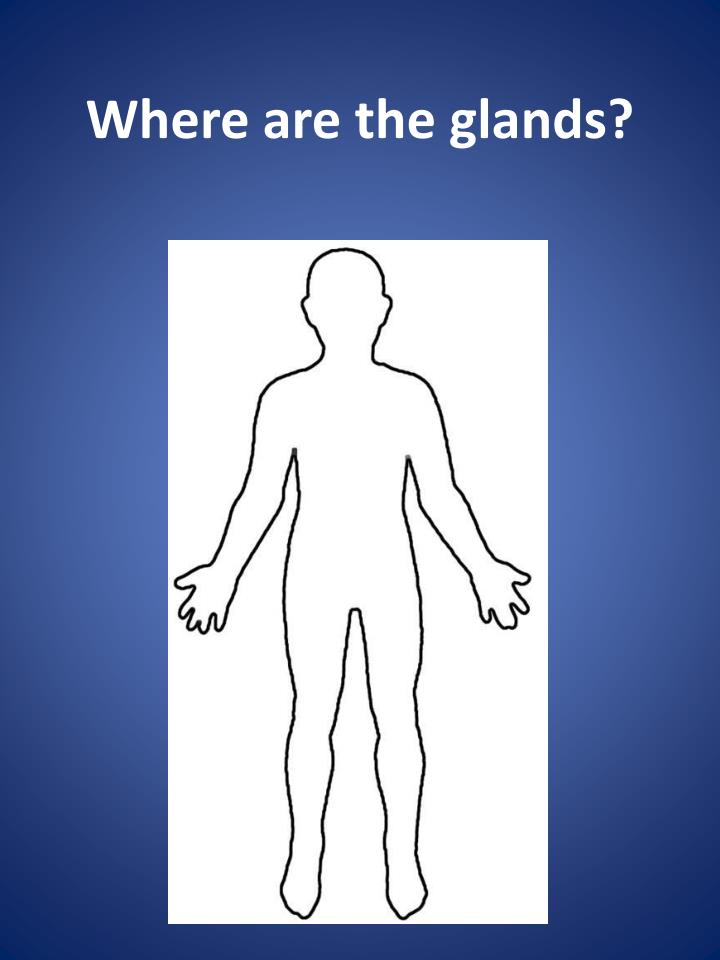 Where are the glands?