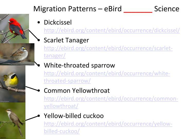 Migration Patterns –