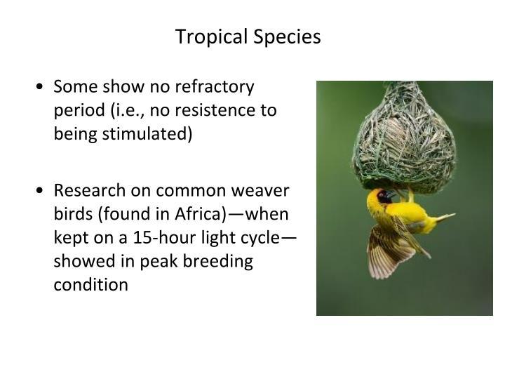 Tropical Species