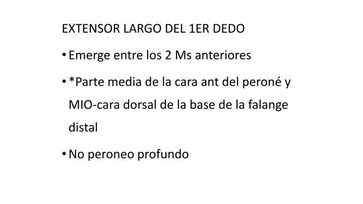 EXTENSOR LARGO DEL 1ER DEDO