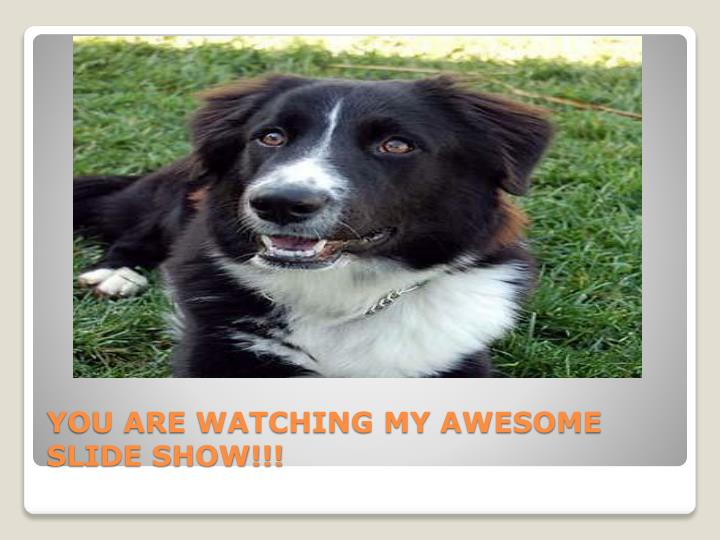 YOU ARE WATCHING MY AWESOME SLIDE SHOW!!!