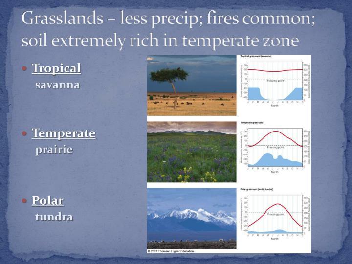 Grasslands – less