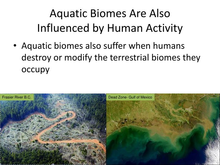 Aquatic Biomes Are Also