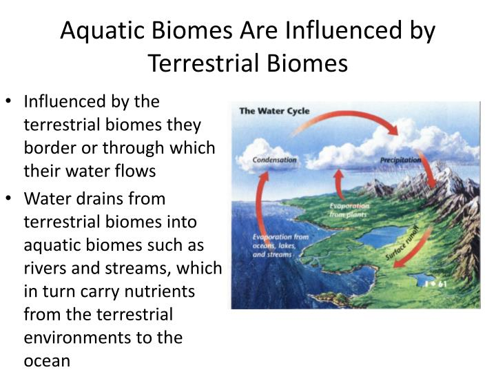 Aquatic Biomes Are Influenced by