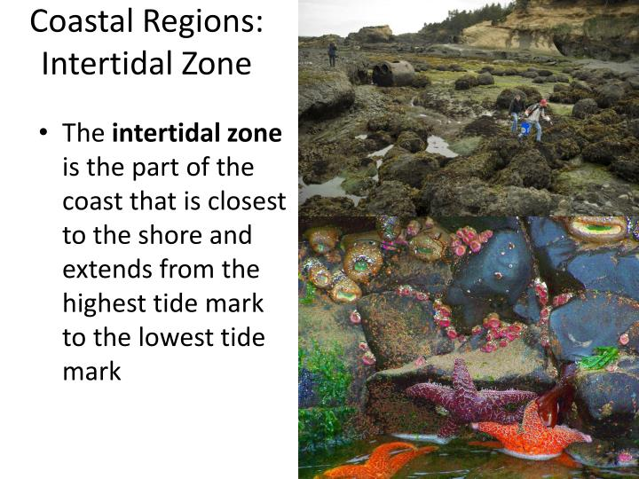 Coastal Regions: Intertidal Zone