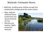 wetlands freshwater biome