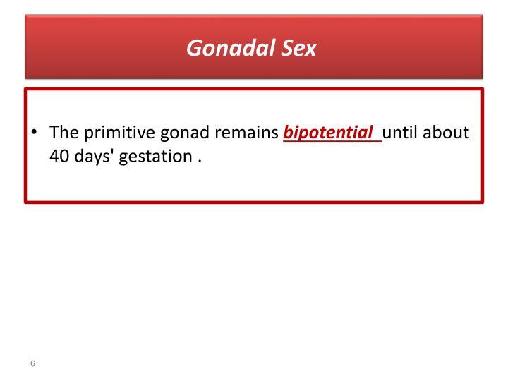 Gonadal