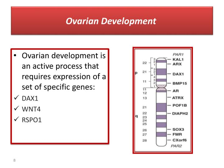 Ovarian Development