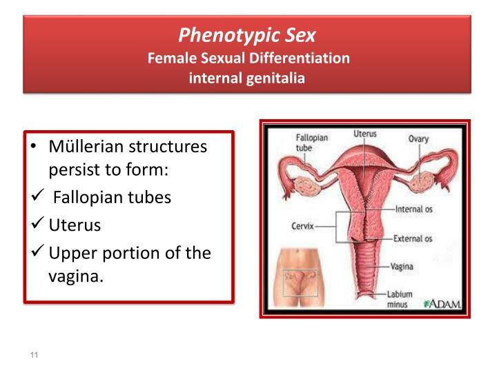 Phenotypic Sex