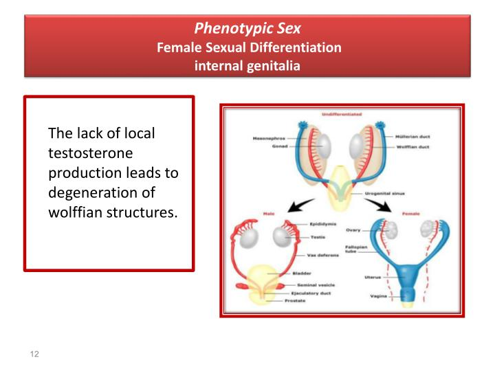 Phenotypic Sex