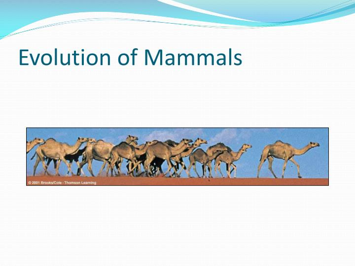 Evolution of Mammals