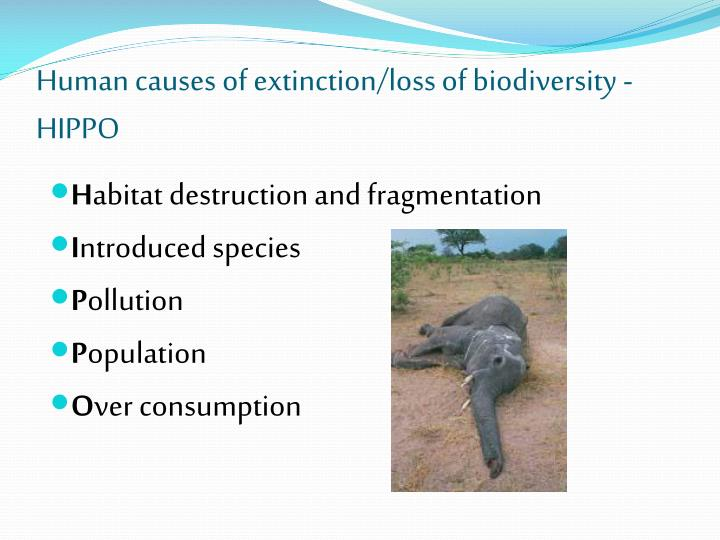 Human causes of extinction/loss of biodiversity - HIPPO