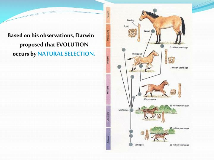 Based on his observations, Darwin proposed that EVOLUTION occurs by