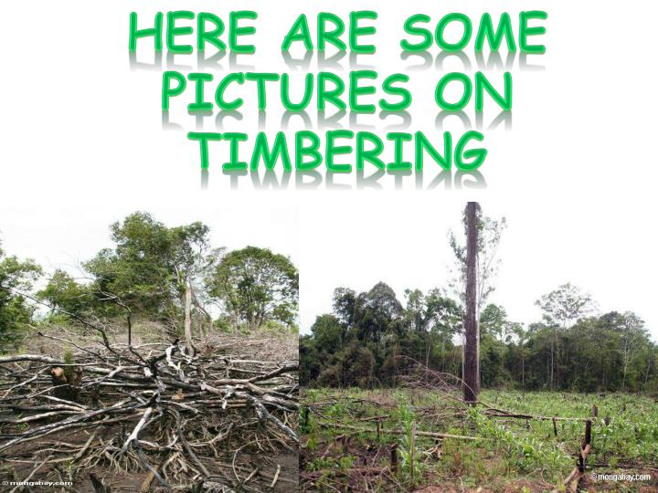 Here are some pictures on timbering