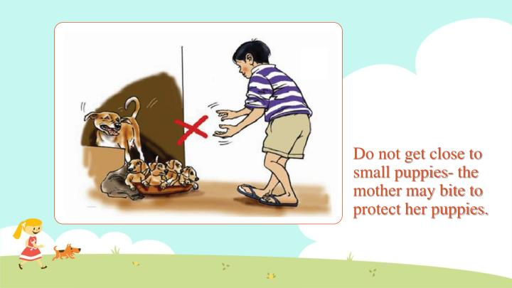 Do not get close to small puppies- the mother may bite to protect her puppies.