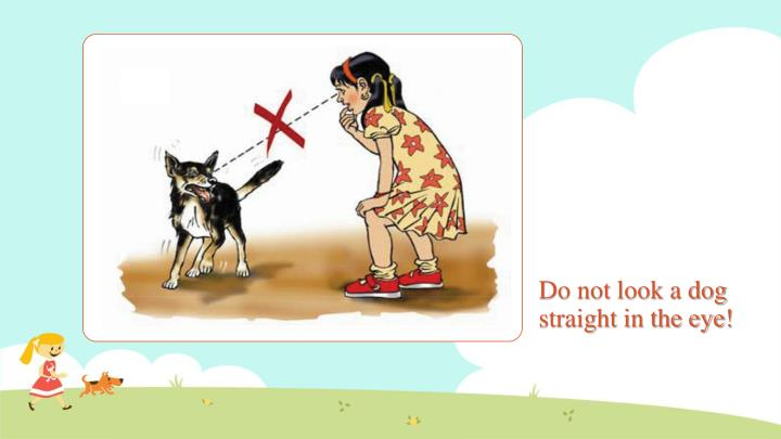 Do not look a dog straight in the eye!