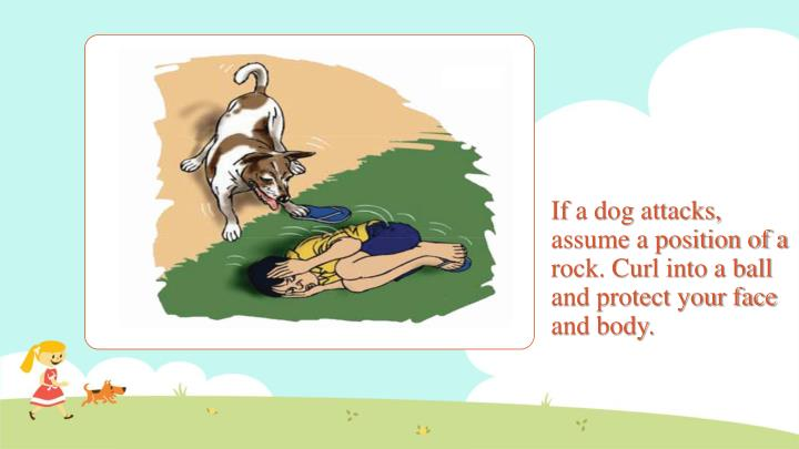 If a dog attacks, assume a position of a rock. Curl into a ball and protect your face and body.