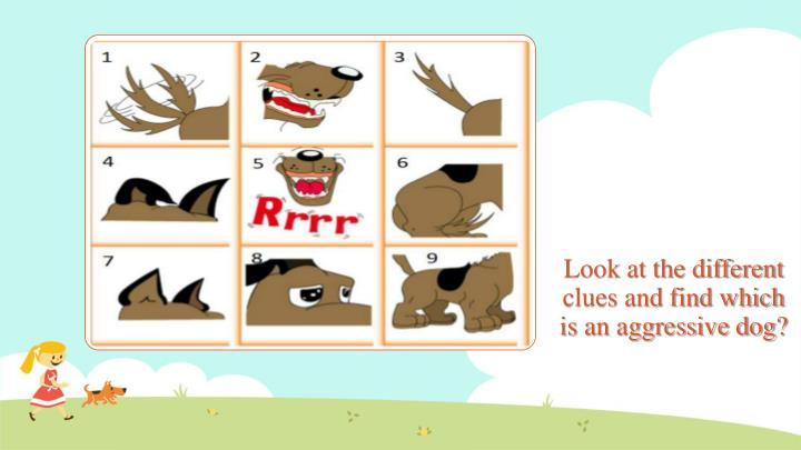 Look at the different clues and find which is an aggressive dog?