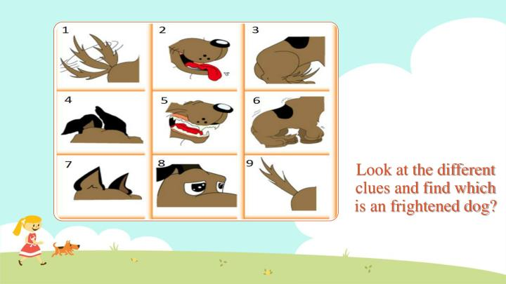 Look at the different clues and find which is an frightened dog?