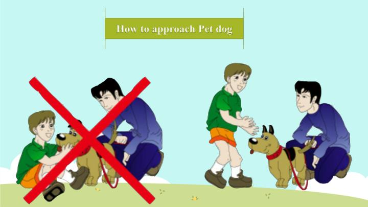 How to approach Pet dog