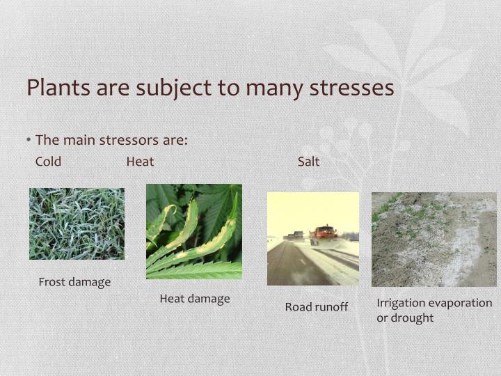 Tougher plants case study
