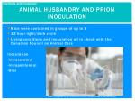 animal husbandry and prion inoculation