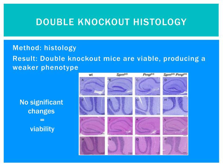 Double knockout histology