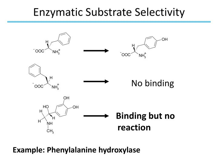 Enzymatic Substrate Selectivity