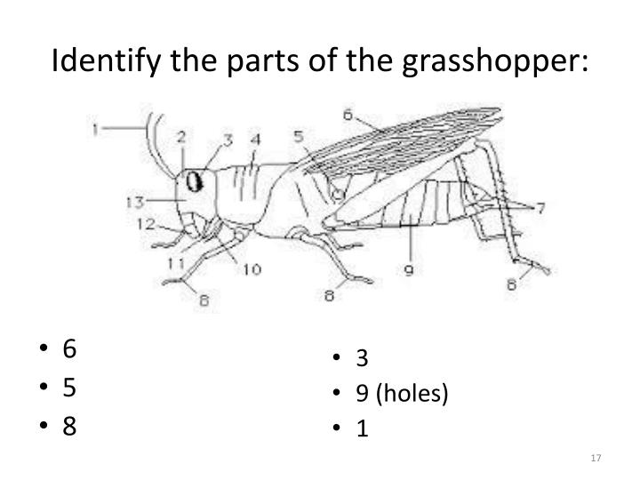 Identify the parts of the grasshopper: