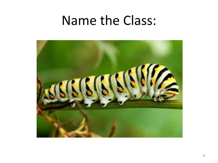 Name the Class: