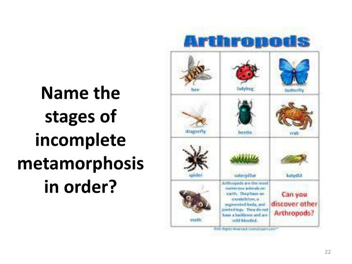 Name the stages of incomplete metamorphosis in order?