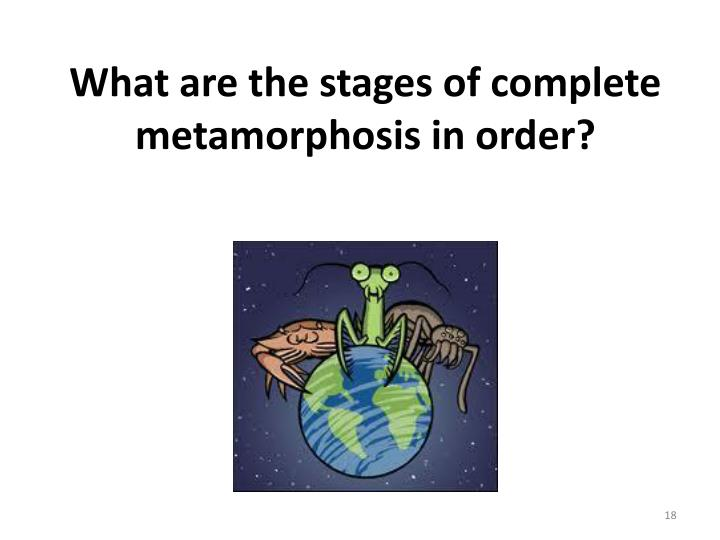 What are the stages of complete metamorphosis in order?