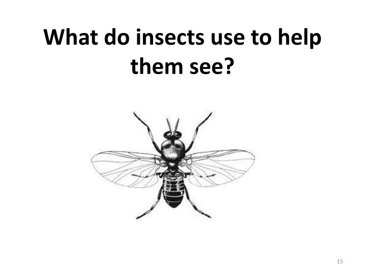 What do insects use to help them see?