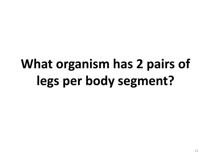 What organism has 2 pairs of legs per body segment?