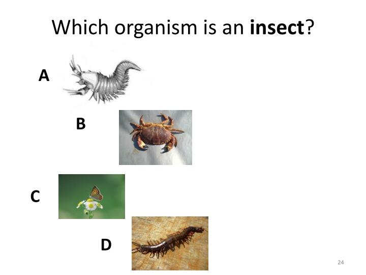 Which organism is an