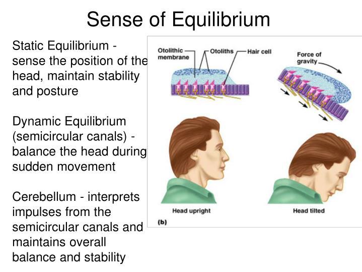 Sense of Equilibrium